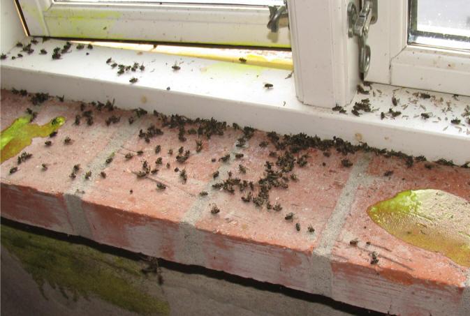 Insektmiddel mod klyngefluer